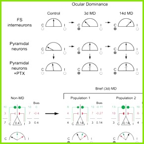 Consequences of bidirectional OD plasticity in fast spiking GABA circuits A Schematic