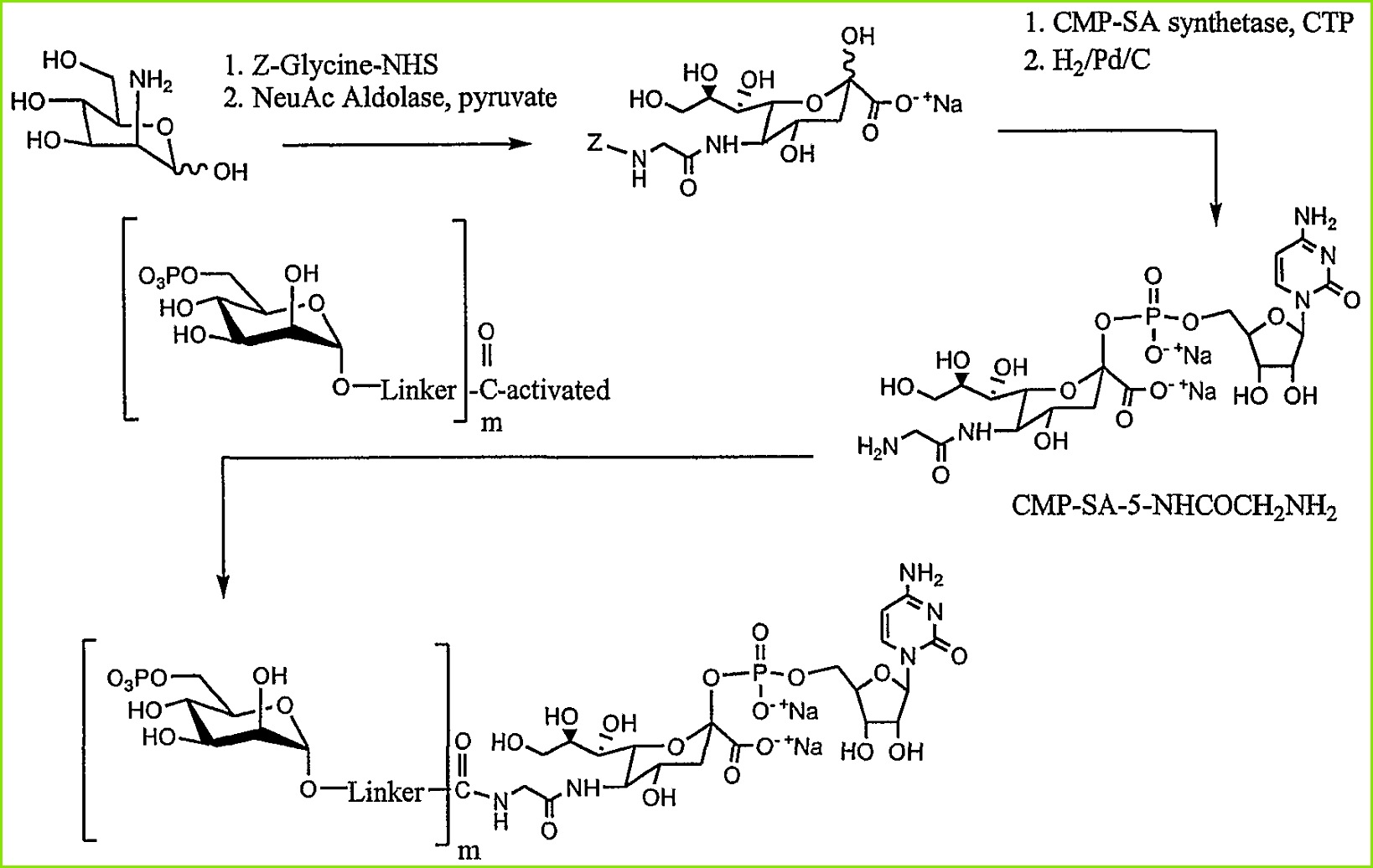 WO A2 Remodeling and glycoconjugation of peptides Google Patents