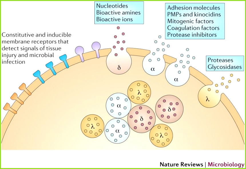 Platelets at the nexus of antimicrobial defence