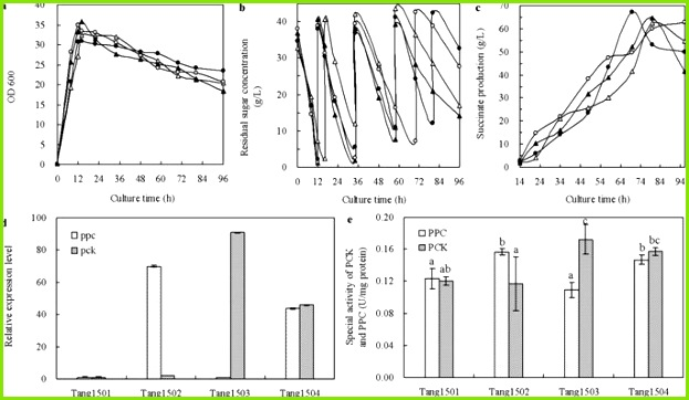 Collaborative regulation of CO2 transport and fixation during succinate production in Escherichia coli