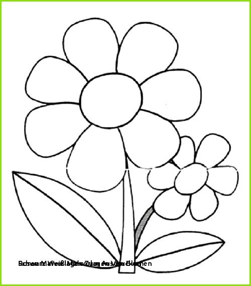 Ausmalbilder Blumen Rosen Malvorlagen Zum Ausdrucken Ausmalbilder Blumen Perfect Color