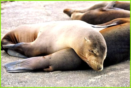 Galapagos Best Guayaquil Day Trips