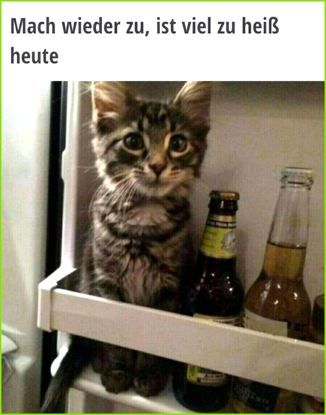 lustiges Bild Typisch Frau Eine von 1793 Dateien in der Kategorie Mit Tieren auf FUNPOT 95 besten Zitate Bilder auf Pinterest – Katze Vermisst Vorlage