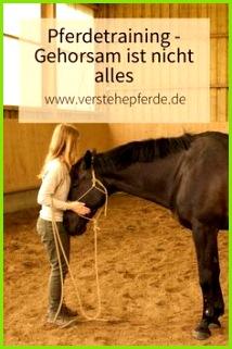 Horsemanship und Pferdetraining Gehorsam ist nicht das Wichtigste sondern Beziehung zum Pferd