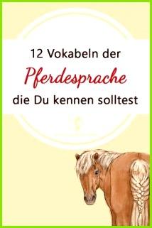 12 Vokabeln der Pferdesprache Du kennen solltest