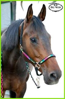 Geflochtenes Pferde Halfter aus Paracord Mehr auf Halswerk