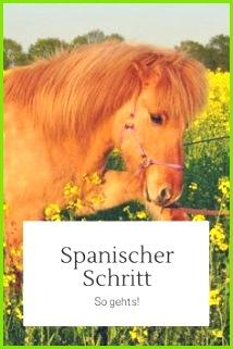 So lernt dein Pferd den spanischen Schritt Zirkuslektion Pferd Bodenarbeit Pferd Pony Pferd