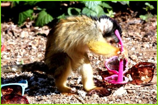 opice ako domácej starostlivosti o každodennº prácu