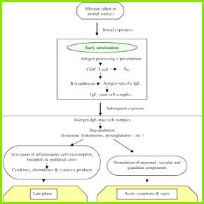 Schematic representation of the pathophysiology of allergic rhinitis