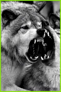 wild dogs on Tumblr