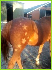 Scherenschnitt Pferd Pferd Scheren Ponyhof Pferdestall Pferd Und Reiter Niedliche Tiere